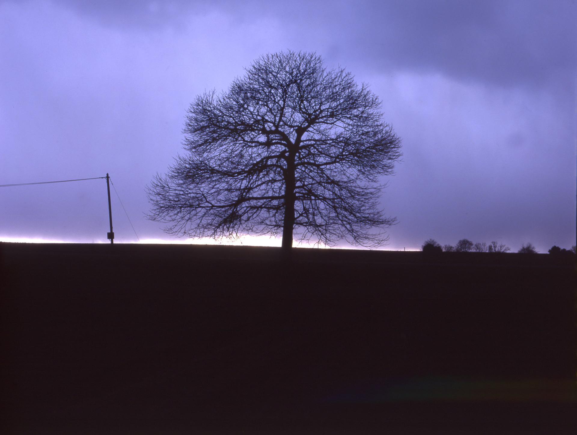 arbre ciel noir